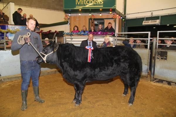 Champion- RE Miller, West Farm – 1st prize British Blue Haltered Heifer