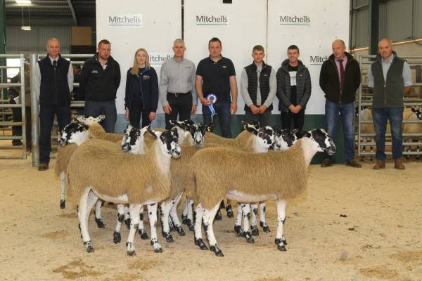 Reserve Champion Pen of Lambs from Messrs Folder, Wescoe