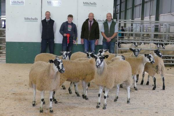 1st Prize Small Breeders- JT Davidson, Bell Mount